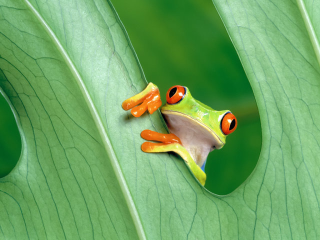 Скачать музыку на выход лягушки