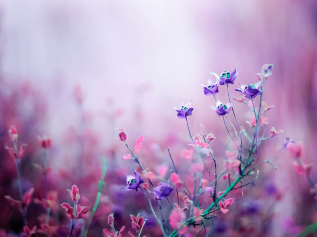 unique beautiful flowers wallpapers - photo #4